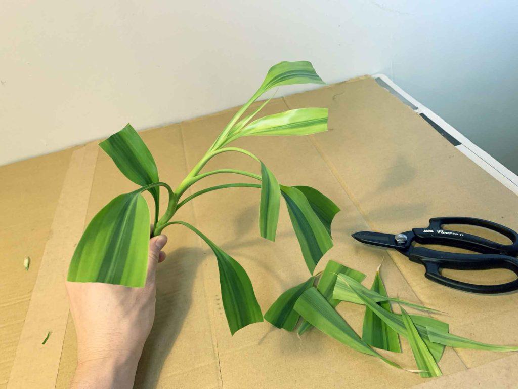 葉の半分はカットして水分蒸発を防ぐ