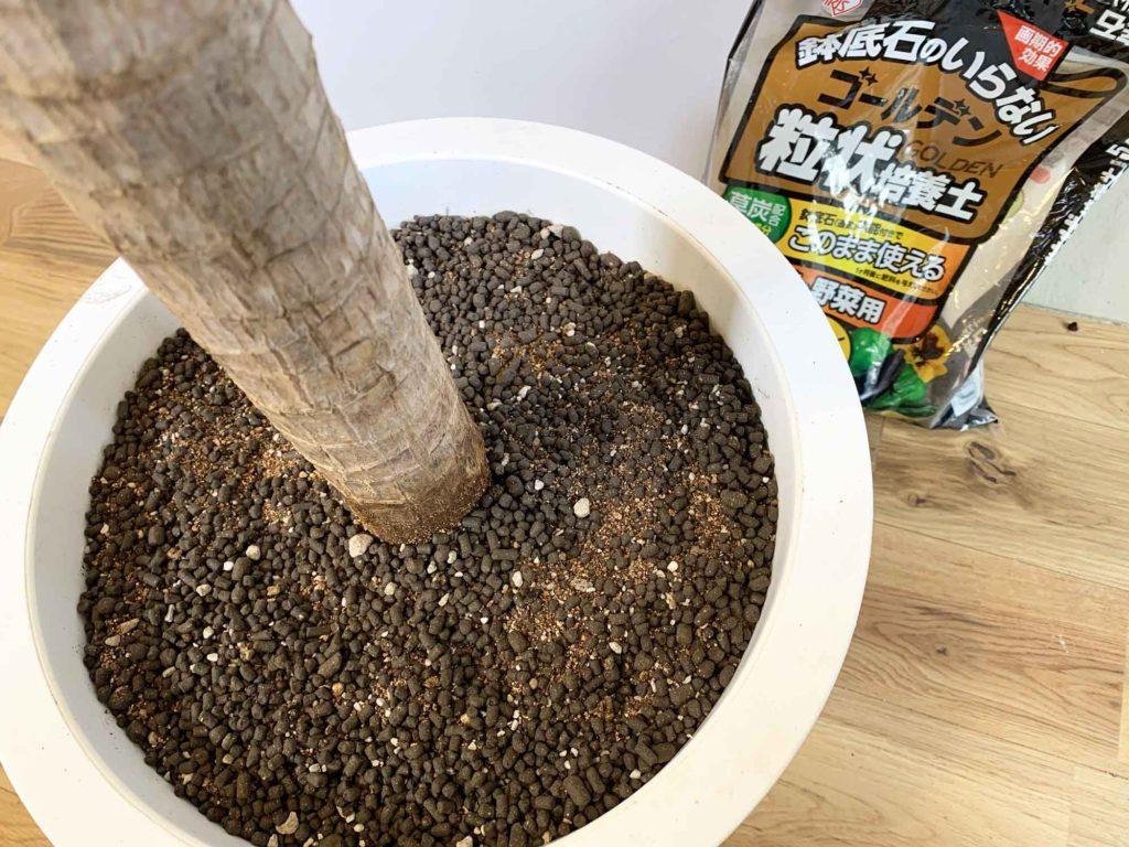 幸福の木(ドラセナ・マッサンゲアナ)に使用しているゴールデン粒状培養土