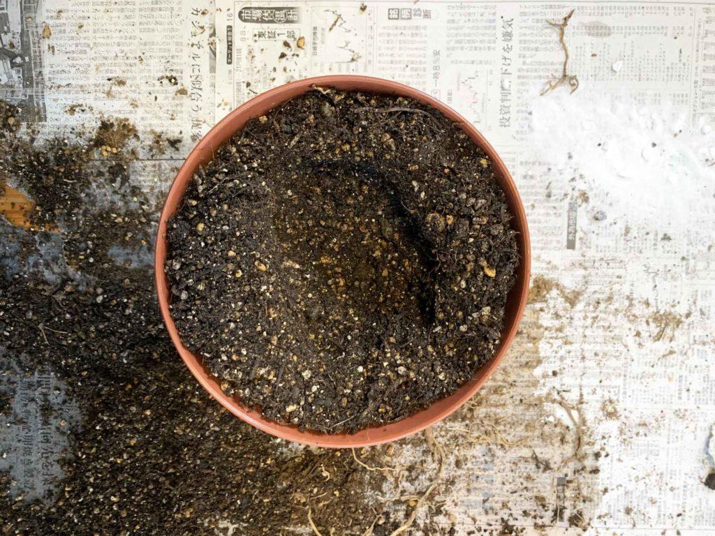 鉢底石の上に土を張る