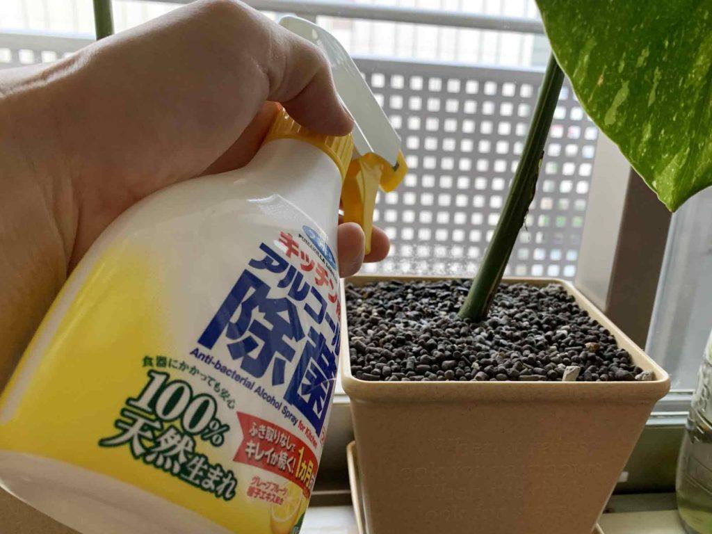観葉植物の土表面にアルコール消毒液をスプレーする