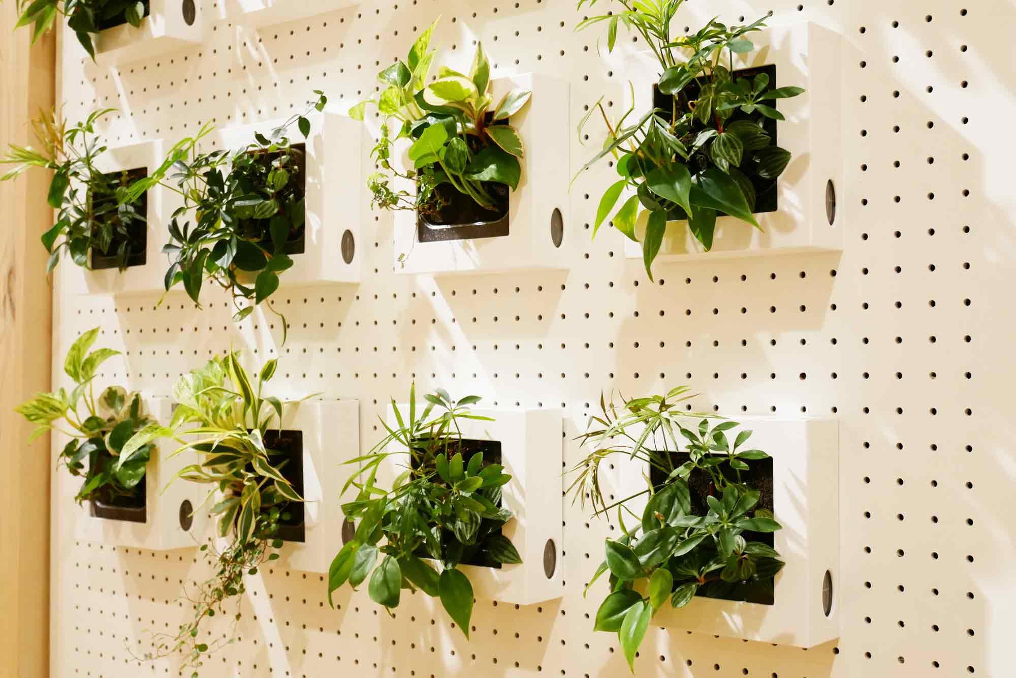 観葉植物の壁掛け