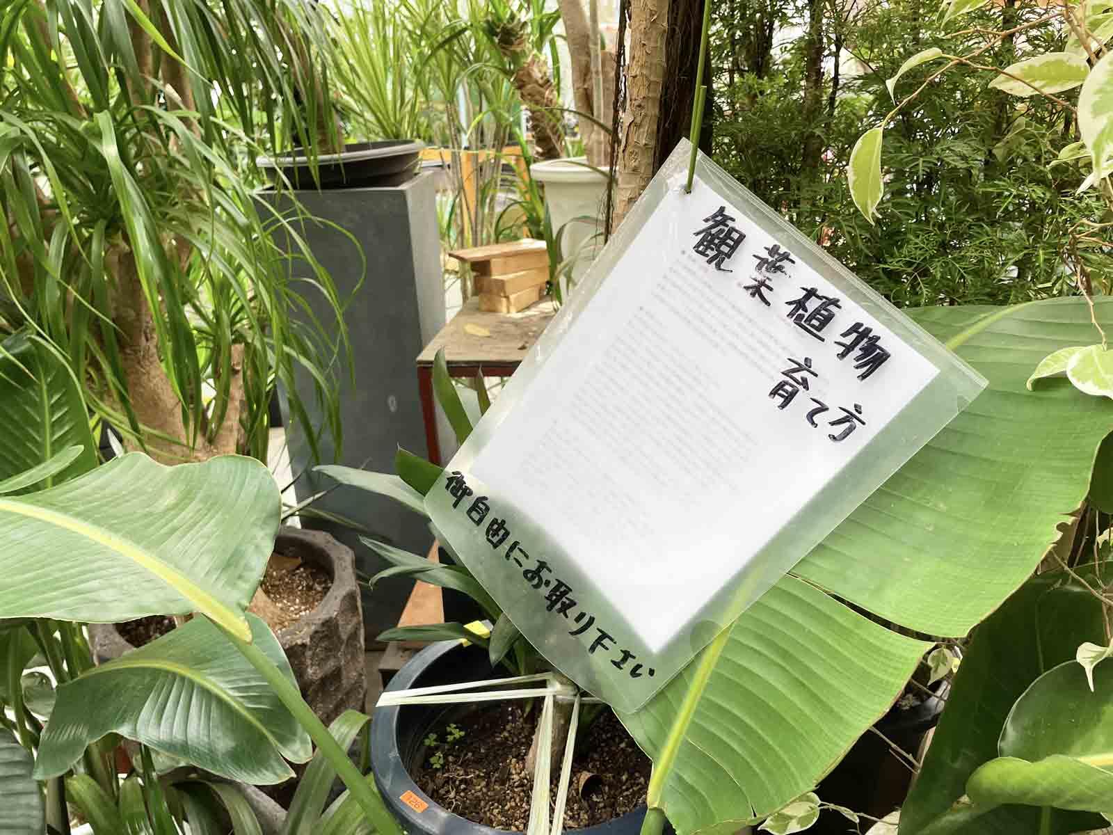 観葉植物の育て方のマニュアルが無料でもらえる