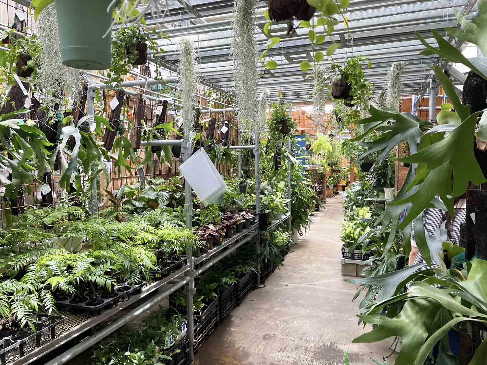 オザキフラワーパークでは全ての植物が生き生きと育っている