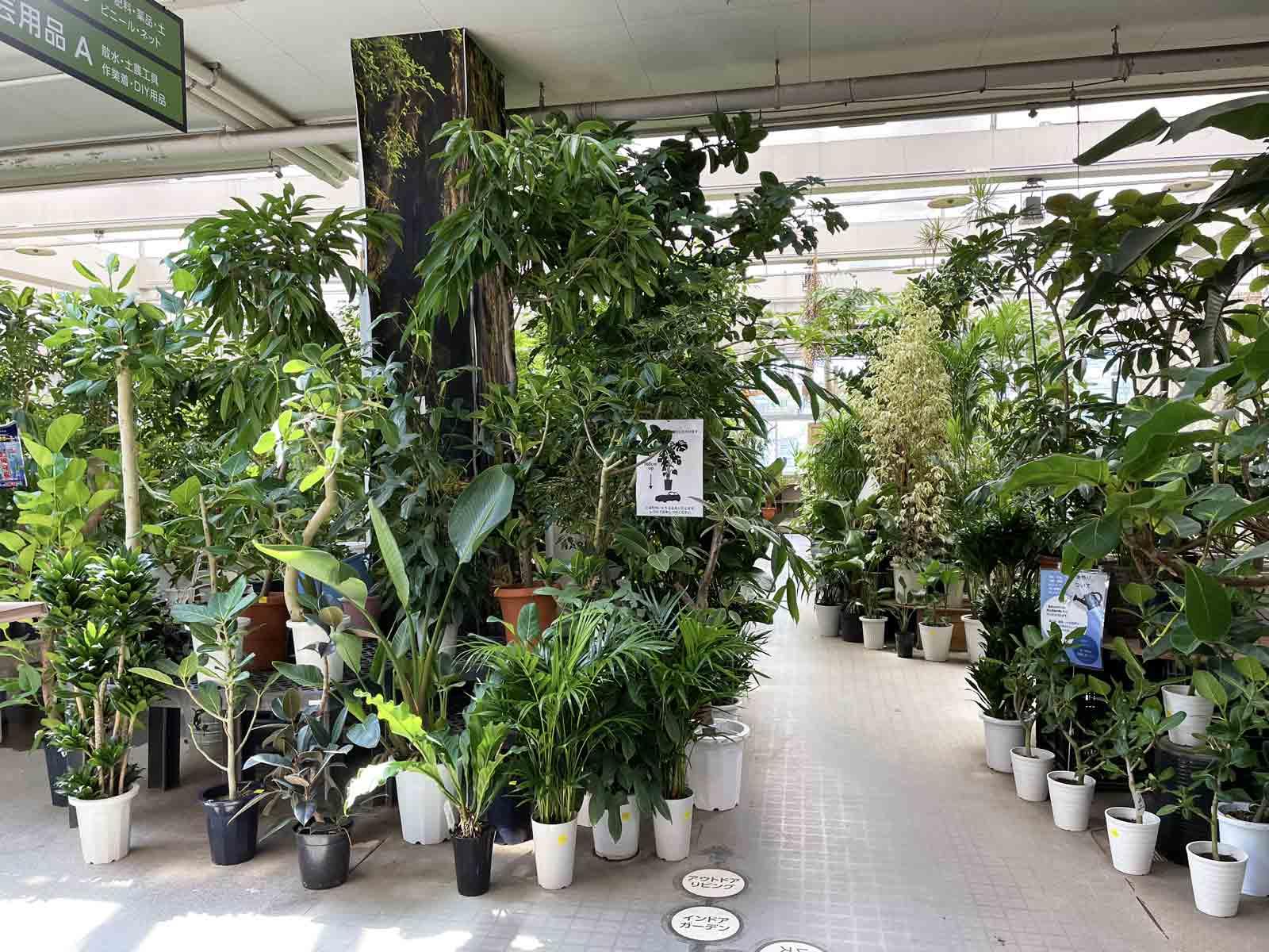 奥へ進むとまるで熱帯雨林のようなコーナーがある