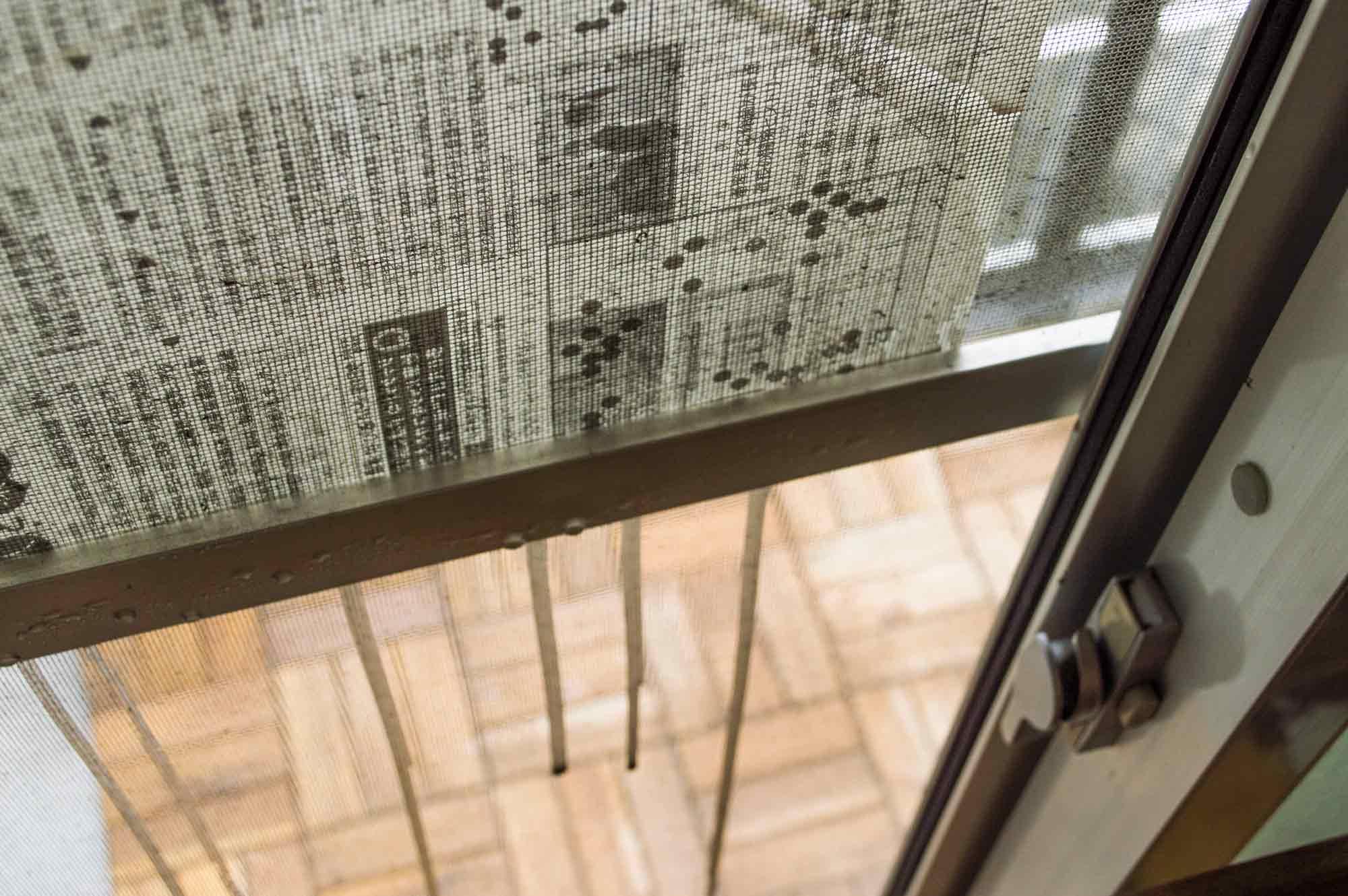 新聞紙を広げてセスキ炭酸ソーダと水を吹きかけて汚れを落としている網戸