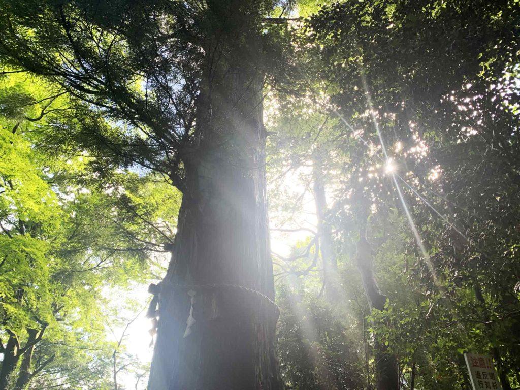 高尾山道中の木と木の間からの木漏れ日