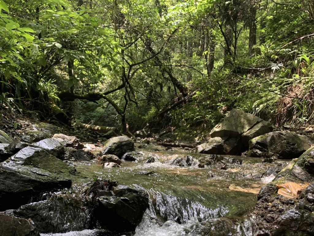 高尾山中の小川と木々