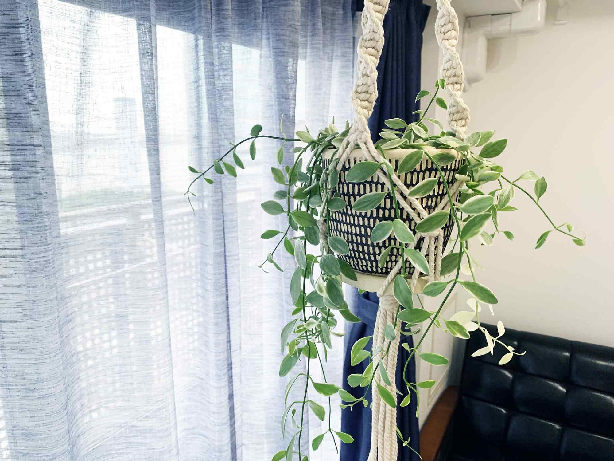 突っ張り棒に吊るした観葉植物