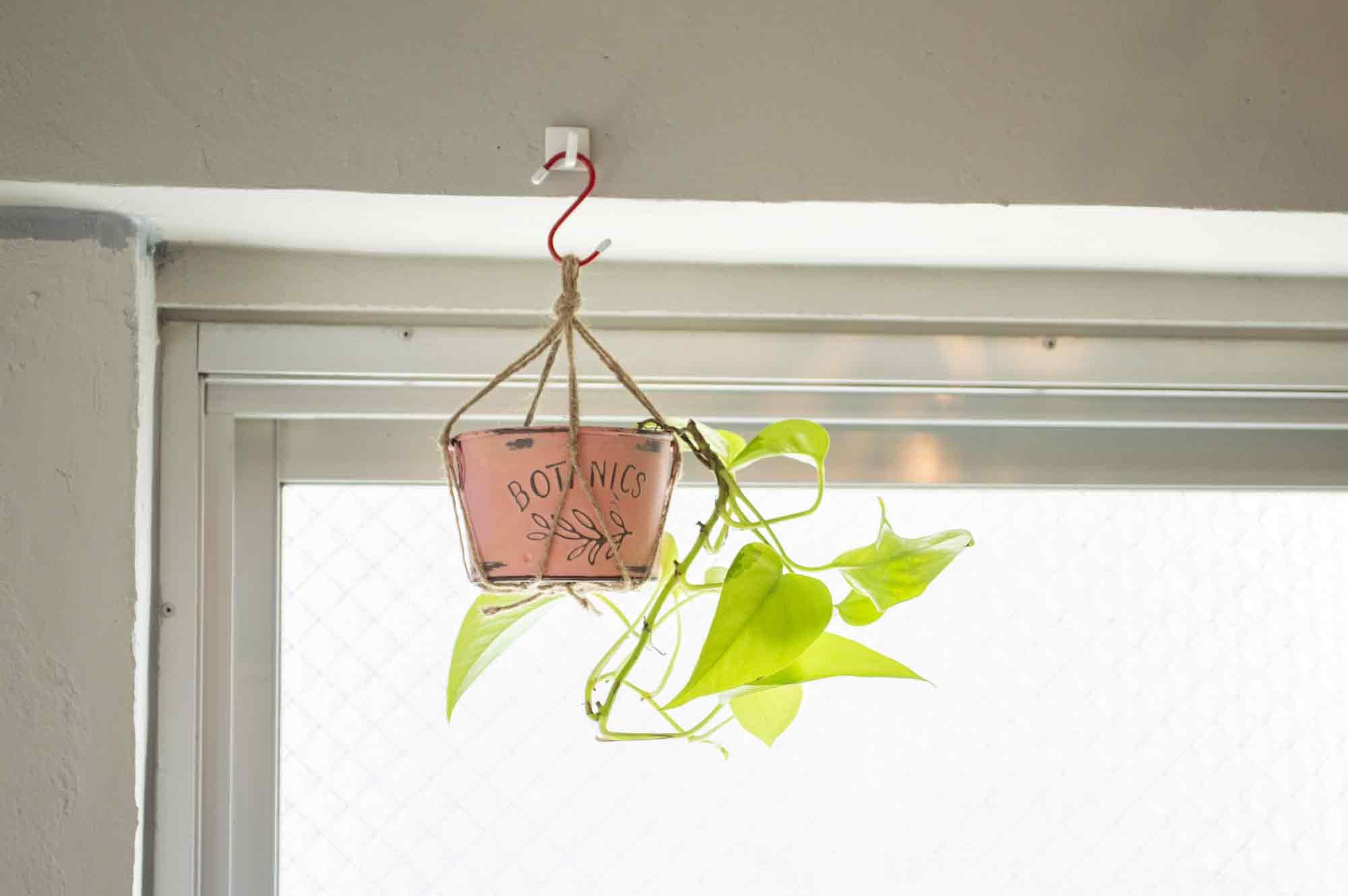 コンクリート壁に取り付けたフックに300gを超える観葉植物を掛ける
