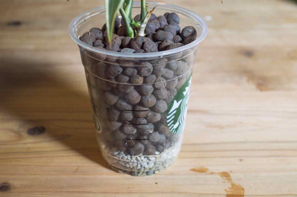 土やハイドロコーンの量に対し1割程度の量を使用する根腐れ防止剤