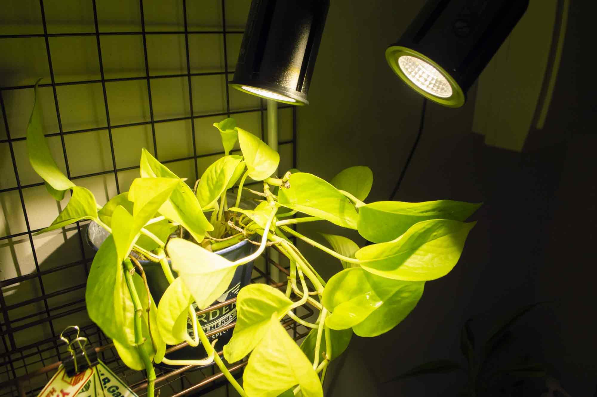 暗いところで照らすLED植物育成ライト