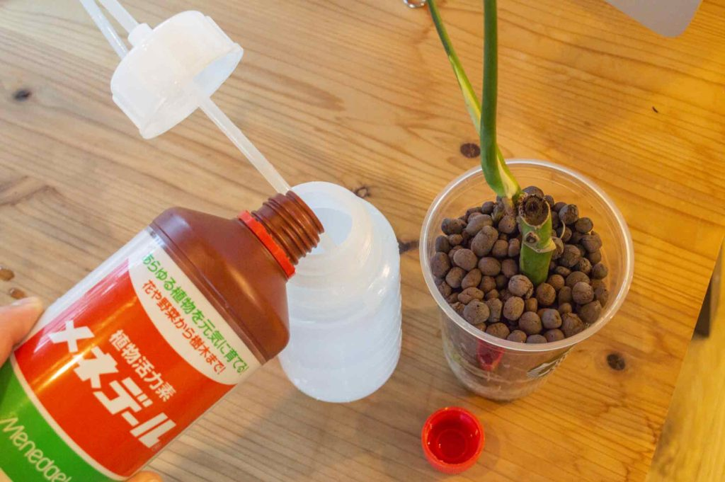 肥料・メネデールを入れるハイドロカルチャー